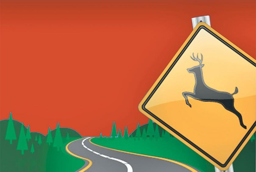 Government of Nepal to come up with ' Wildlife Friendly' Road System